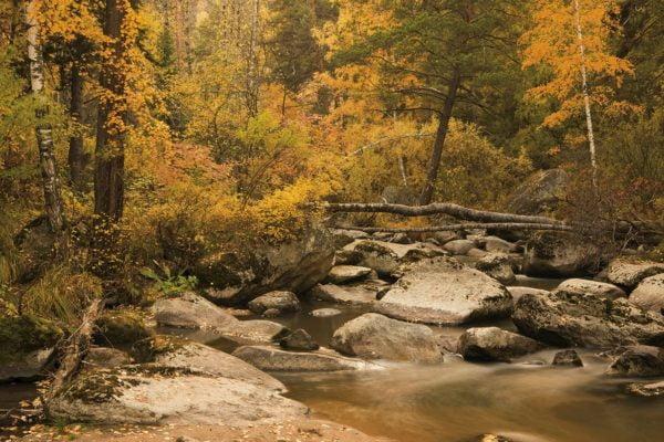 Осенние путевки в Белокуриху