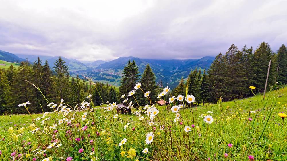 Горные альпийские луга Алтая - самый модный и престижный отдых в Российской Федерации